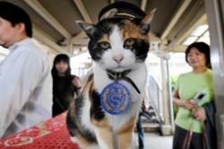 مرگ گربهای که رییس ایستگاه قطار بود + عکس