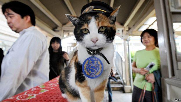 مرگ گربهای که رییس ایستگاه قطار بود +(تصاویر)