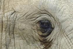 آیا حیوانات هم گریه می کنند؟