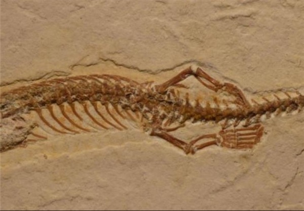 کشف فسیل مار چهار دست و پا در برزیل