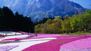پارک هیتسوجی یاما، چیچیبو، ژاپن