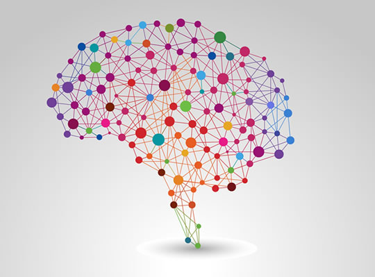 مغز brain