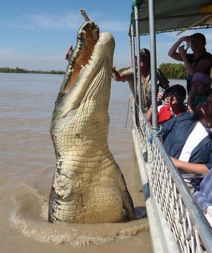 کشنده ترین حیوانات جهان,crocodil