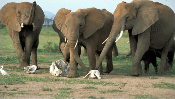 کشنده ترین حیوانات جهان,elephant