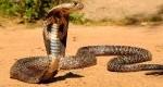 مرگبارترین حیوانات دنیا + عکس