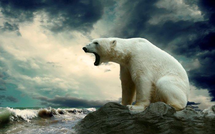 کشنده ترین حیوانات جهان,polar bear