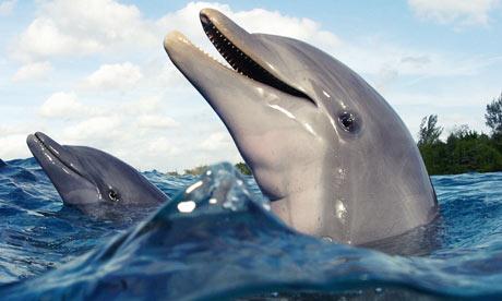 30 گونه دلفین در جهان وجود دارد