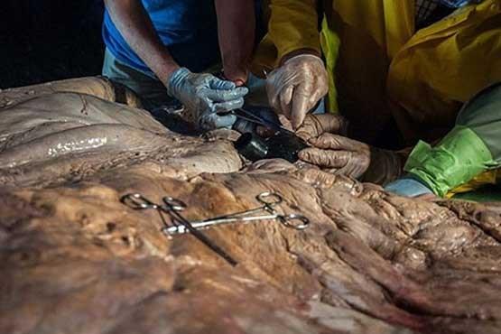 قلب نهنگ بزرگترین قلب دنیا
