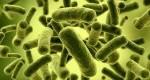 پروبیوتیک چیست و چه فوایدی برای بدن دارد؟
