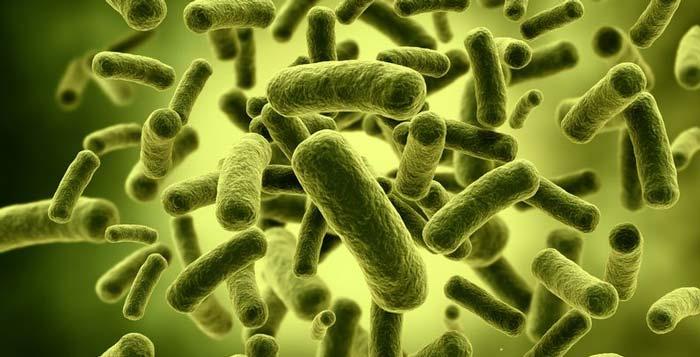 پروبیوتیک Probiotics