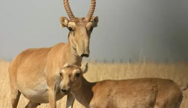عکس حیوانات عجیب و غریب
