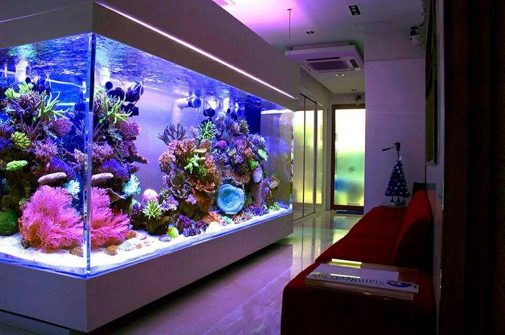 aquarium - چگونه شاد زندگی کنیم؟ 27 نکته برای داشتن زندگی زیباتر