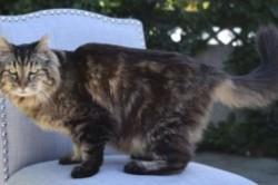 پیرترین گربه دنیا؛ عاشق شکار موش و پنیر