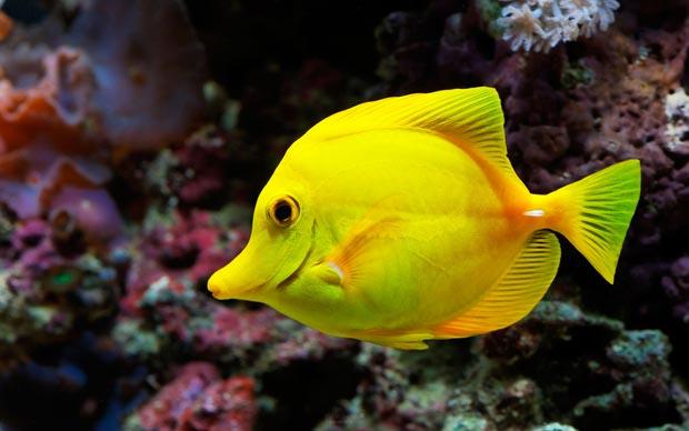تعبیر خواب ماهی fish