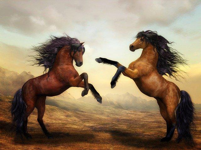 فال چینی سال اسب