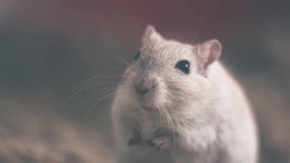 فال متولدین سال موش