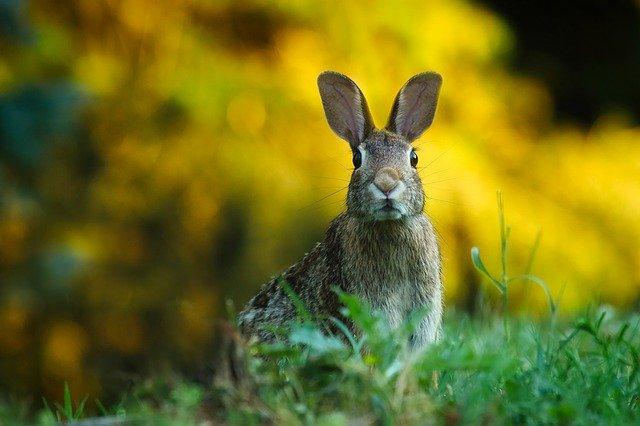 فال چینی متولدین سال خرگوش،طالع بینی سال خرگوش