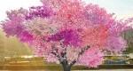 درختی با 40 نوع میوه هستهدار!