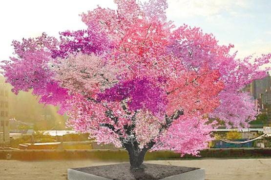 درختی فوق العاده عجيب و حيرت انگيز با 40 نوع میوه هستهدار! / عكس