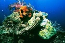 عجیبترین کشفیات انسان از دل اقیانوس+عکس
