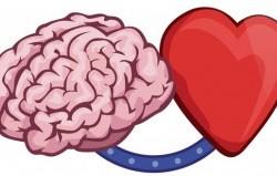 چگونه بفهمیم که با قلبمان فکر میکنیم یا با مغزمان؟