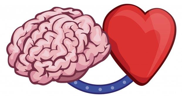 مغز قلب