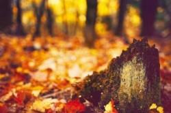 5 نکته برای عکاسی بهتر در فصل پاییز