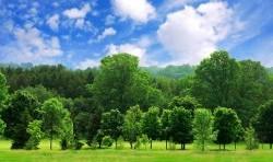تعداد درختان روی زمین چقدر است؟