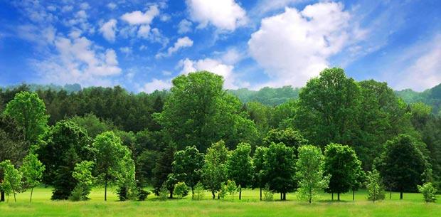 تعداد درختان زمین tree