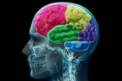 افکار چگونه توسط مغز کنترل میشوند؟