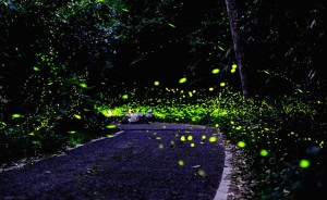 firefly-park china
