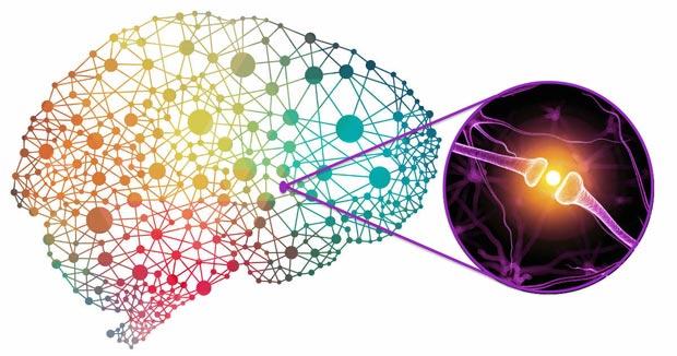 عصب زایی سلول های مغز