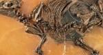 کشف اسب باردار ۴۸ میلیون ساله+عکس
