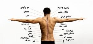 ارتباط درد پشت و سلامت