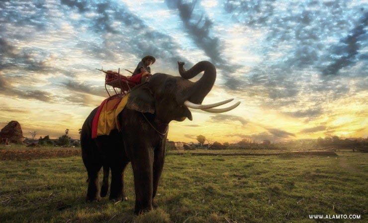 سواری بر روی فیل تایلند