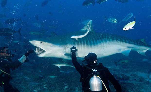 ارزان ترین مقاصد گردشگری جهان,Fiji-Beqa-Shark-Dive-6
