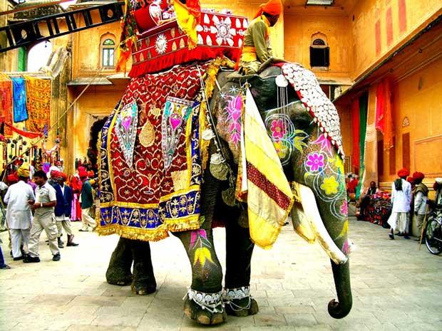 ارزان ترین مقاصد گردشگری جهان,India_elephant