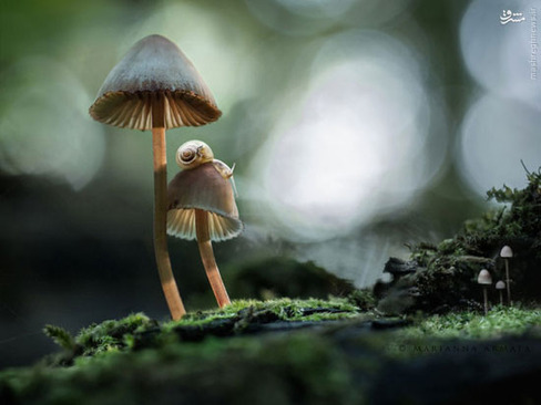 عکس قارچ