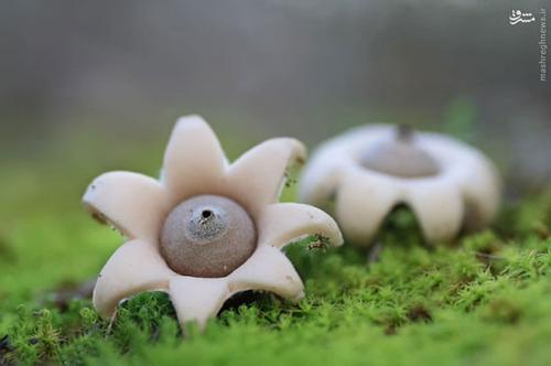 تصاویر شگفتانگیز از دنیای قارچها