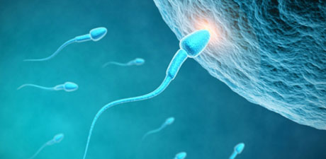 sperm-درباره اسپرم,درمورد مایع منی
