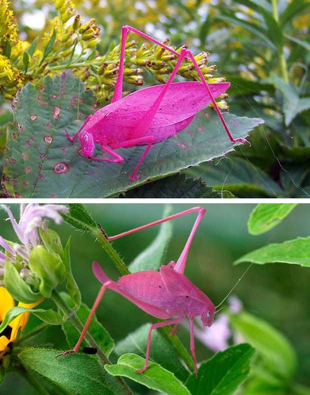 unusual-colored-animals-1,حیوانات رنگارنگ