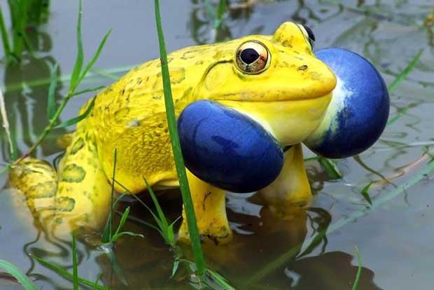 unusual-colored-animals-61,حیوانات رنگارنگ