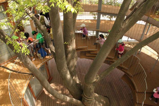 درخت در وسط مهد کودک