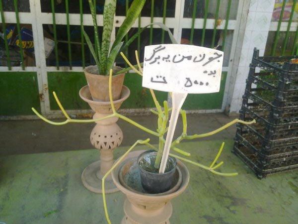 نامگذاری عجیب گیاهان