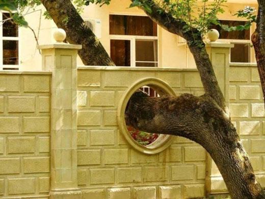 احترام به درخت