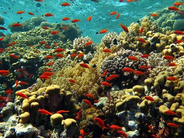 دریای سرخ-Red-Sea-Reef