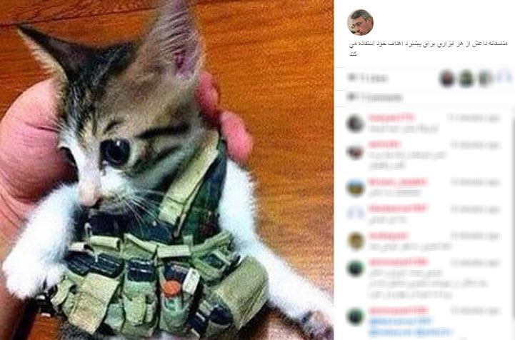گربه انتحاری داعش (+عکس)