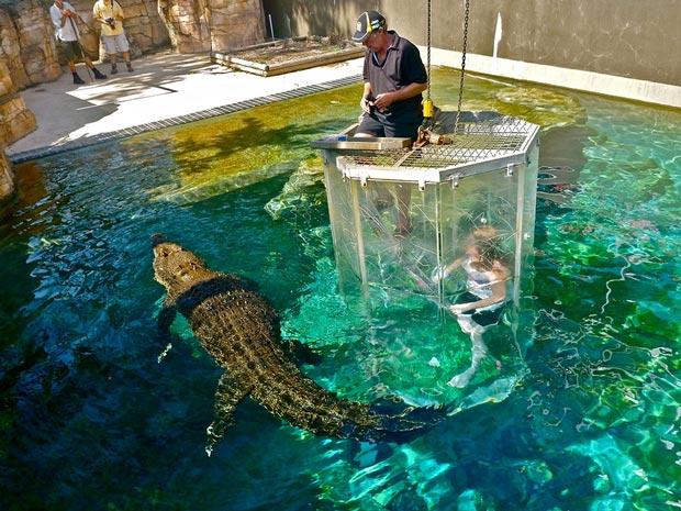 بهترین استخر جهان,8.استخر Crocosaurus Cove
