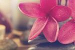 گل flowers_spa