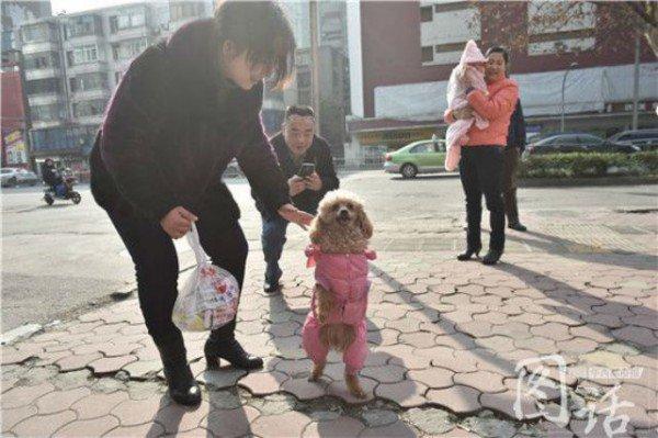 سگی که روی دوپا راه میرود